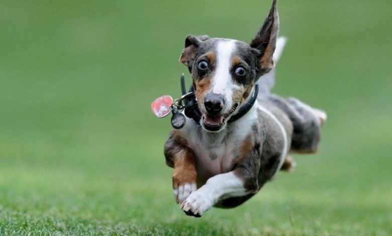 Photo of What to do with a hyperactive dog?