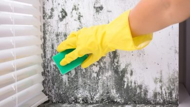 Photo of Protecting Yourself during Mold Remediation