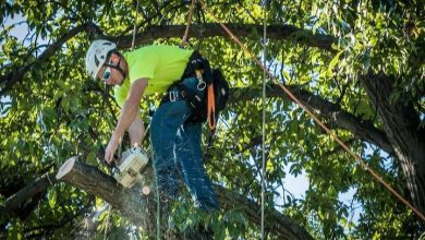 Photo of ALL YOU NEED TO KNOW ABOUT THE BEST TREE SERVICE DES MOINES