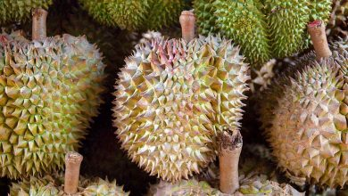 Photo of Why Durian Should Be Part of Your Christmas Celebration?