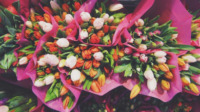 Photo of How Long do Tulip Bouquets Last?