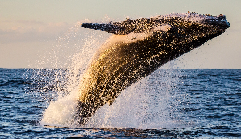 Photo of Top 4 States to Go Whale Watching
