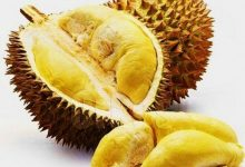 Photo of What are the Commonly Asked Questions About Durian?