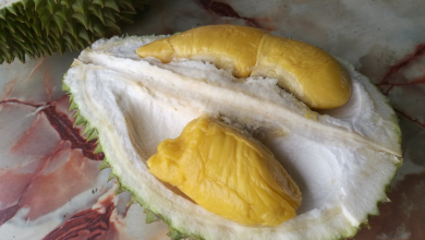 Photo of 7 Mouth-Watering Recipes You Can Try With Your Mao Shan Wang Durian