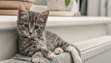 Photo of Things to Know before Adopting a Kitten
